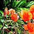 Maui Floral by Joan  Minchak