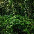 Maui Jungle by Blake Webster