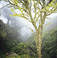 Maui Moss Tree by Erik Aeder - Printscapes
