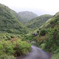 Maui Road Through The Hills by Robin Maria Pedrero