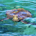 Maui Sea Turtle by Eddie Yerkish