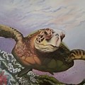 Maui Sea Turtle by Lorraine Wilcox