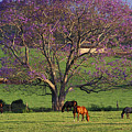 Maui, Upcountry by Ron Dahlquist - Printscapes
