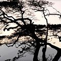 Maui Windy Tree by Joan  Minchak