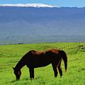Mauna Kea Countryside by Pamela Walton