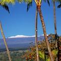 Mauna Kea  by Dina Holland