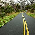 Mauna Loa Road - Hawaii by Charmian Vistaunet