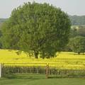May Fields by Susan Baker