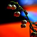 May Flowers by Susanne Van Hulst