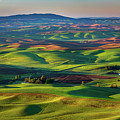 May On The Palouse  by Chris Steele