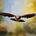 Maybe - Hawk Art by Jordan Blackstone