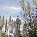 Mayflower Memorial Through The Pampas Grass by Terri Waters