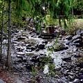 Mcdonald Lake Stream by Darrell Mcgahhey