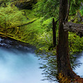 Mckenzie River From Sahalie Falls by Cat Connor