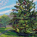 Mcmichael Spruce by Phil Chadwick