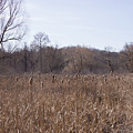 Meadow At Arnold Arboretum by Adam Gladstone
