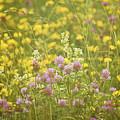 Meadow Dreams... by Nina Stavlund