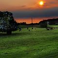 Meadow Field by Svetlana Sewell