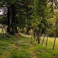 Meadow Grass Path by Pati Photography