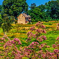 Meadow House At Longwood by Nick Zelinsky