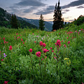 Meadow Of Wildflowers In The Wasatch by James Udall
