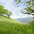 Meadow View Spring by Karen  W Meyer