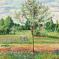 Meadow With Grey Horse, Eragny by Camille Pissarro