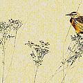 Meadowlark In Kansas Prairie 1 by Anna Louise