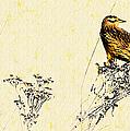 Meadowlark In Kansas Prairie 2 by Anna Louise