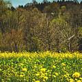 Golden Hay  by Howard Roberts