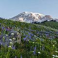 Meadows Of Glory by Mike Reid