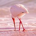 Meandering Beauty Cortez Beach by Betsy Knapp
