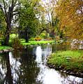 Meandering Creek In Autumn by Debbie Oppermann