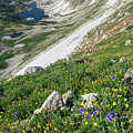 Medicine Bow Wildflowers by Aaron Spong