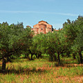 Medieval Abbey Among Olive Trees In Italy by Andrea Mazzocchetti