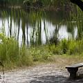 Meditation Spot By A Pond by Tina B Hamilton