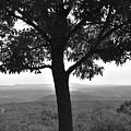 Meditation Tree  by Lisa Kleiner