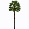 Mediterranean Fan Palm Tree by Corey Ford