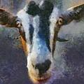 Mediterranean Goat by Dragica  Micki Fortuna