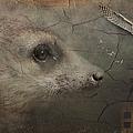 Meerkat by Maria Astedt