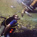 Meet The Sea Lions by Matt Swinden
