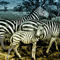 Meet The Zebras by Bill Cannon