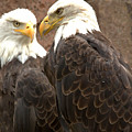 Meeting Of The Eagles Portrait by Adam Jewell