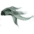 Megic Fish 1 by James Lanigan Thompson MFA