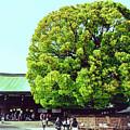 Meiji Shrine by Nisah Cheatham