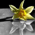 Mellow Yellow by Karen Scovill