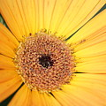 Mellow Yellow by Ron Read