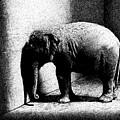 Melancholy Elephant by Don Locke