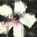 Melting Hibiscus by Stan  Magnan