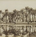 Men With Goats Under Palm Trees On The Water In Bedrechen, Bonfils, C. 1895 - In Or Before 1905 by Bonfils